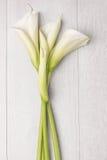 Κομψό λουλούδι άνοιξη, calla κρίνος Στοκ Φωτογραφίες