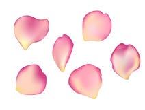 Κομψό σύνολο όμορφων ροδαλών πετάλων Στοκ εικόνα με δικαίωμα ελεύθερης χρήσης