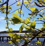 Κοντά βγάζει φύλλα στοκ εικόνες