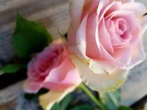 Κοντά λουλούδια στοκ φωτογραφία