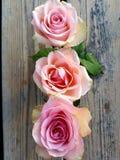Κοντά λουλούδια στοκ φωτογραφία με δικαίωμα ελεύθερης χρήσης