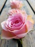 Κοντά λουλούδια στοκ εικόνα με δικαίωμα ελεύθερης χρήσης