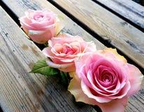 Κοντά λουλούδια στοκ φωτογραφίες