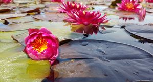 Κοντά λουλούδια στοκ εικόνες