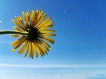 Κοντά σε ένα λουλούδι στοκ εικόνα