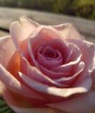Κοντά σε ένα λουλούδι στοκ εικόνες
