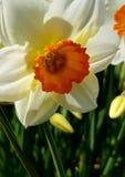 Κοντά σε ένα λουλούδι στοκ εικόνες με δικαίωμα ελεύθερης χρήσης