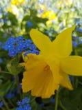 Κοντά σε ένα λουλούδι στοκ φωτογραφία με δικαίωμα ελεύθερης χρήσης
