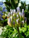 Κοντά σε ένα λουλούδι στοκ φωτογραφία