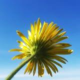 Κοντά σε ένα λουλούδι στοκ φωτογραφίες