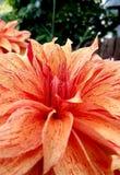 Κοντά σε ένα λουλούδι στοκ εικόνα με δικαίωμα ελεύθερης χρήσης