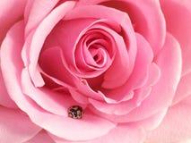 Κοντά σε ένα ladybug στοκ φωτογραφίες με δικαίωμα ελεύθερης χρήσης