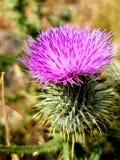 Κοντά σε ένα wildflower στα άγονα τοπία στοκ φωτογραφίες με δικαίωμα ελεύθερης χρήσης