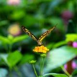 Κοντά σε μια πεταλούδα στοκ εικόνα με δικαίωμα ελεύθερης χρήσης