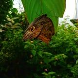 Κοντά σε μια πεταλούδα στοκ φωτογραφίες