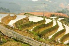 Κοντά σε Sapa, Stagewise Ricefields Στοκ Εικόνες