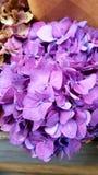 Κοντά στα λουλούδια στοκ εικόνα με δικαίωμα ελεύθερης χρήσης