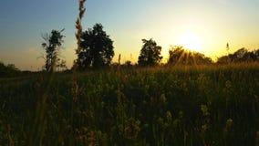 Κοντά στη σήραγγα αγάπης της άκρης του δρόμου του εγκαταλειμμένου ηλιοβασιλέματος γραμμών τραίνων απόθεμα βίντεο