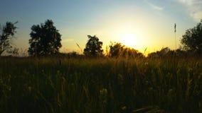 Κοντά στη σήραγγα αγάπης της άκρης του δρόμου του εγκαταλειμμένου ηλιοβασιλέματος γραμμών τραίνων φιλμ μικρού μήκους