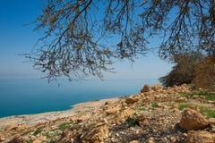 Κοντά στη EN όαση ερήμων Gedi στη δυτική ακτή της νεκρής θάλασσας ι Στοκ Εικόνες