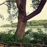 κοντά στο δέντρο ποταμών Στοκ φωτογραφία με δικαίωμα ελεύθερης χρήσης