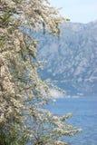 Κοντινό νερό Tamarisk στοκ εικόνες
