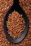 Κοντό κόκκινο ρύζι σιταριού Στοκ Εικόνες