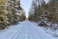 κοντό χειμερινό δάσος υπολοίπου πεζοπορίας μαγικό Στοκ εικόνες με δικαίωμα ελεύθερης χρήσης