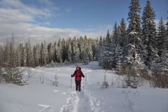 κοντό χειμερινό δάσος υπολοίπου πεζοπορίας μαγικό Στοκ Εικόνα
