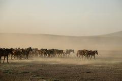 Κοπάδια αλόγων που τρέχουν στον κάλαμο, kayseri, turkeyw στοκ φωτογραφίες με δικαίωμα ελεύθερης χρήσης
