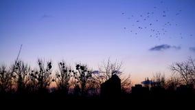 Κοπάδια των πουλιών που πετούν πέρα από τη μόνη εγκαταλειμμένη πόλη, τρομακτική σκοτεινή εικονική παράσταση πόλης, σκιές απόθεμα βίντεο