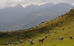 κοπάδι αγελάδων Στοκ εικόνα με δικαίωμα ελεύθερης χρήσης