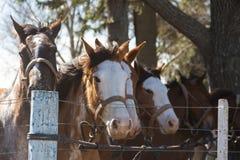 Κοπάδι αλόγων για τη εκπαίδευση αλόγου σε περιστροφές στοκ φωτογραφίες