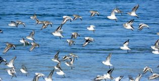 κοπάδι πουλιών που εκφο στοκ φωτογραφίες με δικαίωμα ελεύθερης χρήσης
