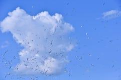 κοπάδι πουλιών στοκ φωτογραφίες με δικαίωμα ελεύθερης χρήσης