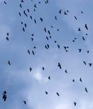 κοπάδι πουλιών στοκ εικόνα