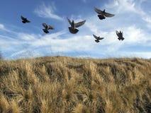κοπάδι πουλιών