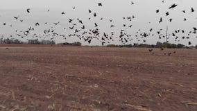Κοπάδι της απογείωσης πουλιών φιλμ μικρού μήκους