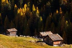 Κοπάδι του παραδοσιακού ξύλινου barnin τρία φθινοπώρου προβάτων και κοντά σε Matterhorn, Ελβετία Στοκ εικόνα με δικαίωμα ελεύθερης χρήσης