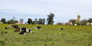 Κοπάδι των αγελάδων που στηρίζονται στην Ουρουγουάη. στοκ φωτογραφία με δικαίωμα ελεύθερης χρήσης