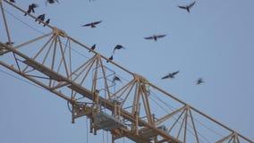 Κοπάδι των κοράκων που πετούν μακριά απόθεμα βίντεο