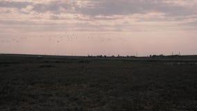 Κοπάδι των πουλιών που πετούν μακρυά από έναν μεγάλο τομέα το βράδυ φιλμ μικρού μήκους
