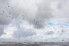 Κοπάδι των πουλιών που πετούν πέρα από τα κύματα της θάλασσας της Βαλτικής, Λετονία Στοκ Εικόνες