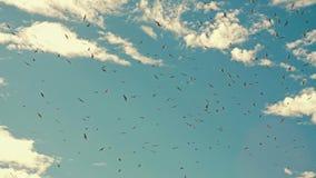 Κοπάδι των πουλιών στον ουρανό φιλμ μικρού μήκους