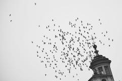 Κοπάδι των πουλιών στο SAN Benigno Ιταλία στοκ εικόνα