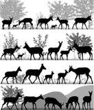 Κοπάδι Pronghorns Διανυσματική απεικόνιση