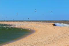 Κοπάδι seagulls, θάλασσα, άμμος Στοκ Φωτογραφίες