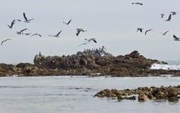 Κοπάδι seagulls κατά την πτήση Στοκ εικόνες με δικαίωμα ελεύθερης χρήσης