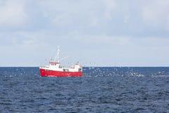 Κοπάδι seagulls που χαράζουν ένα αλιευτικό πλοιάριο που αλιεύει για το βακαλάο σε Andenes Στοκ Εικόνα