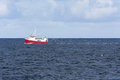 Κοπάδι seagulls που χαράζουν ένα αλιευτικό πλοιάριο που αλιεύει για το βακαλάο σε Andenes Στοκ εικόνες με δικαίωμα ελεύθερης χρήσης